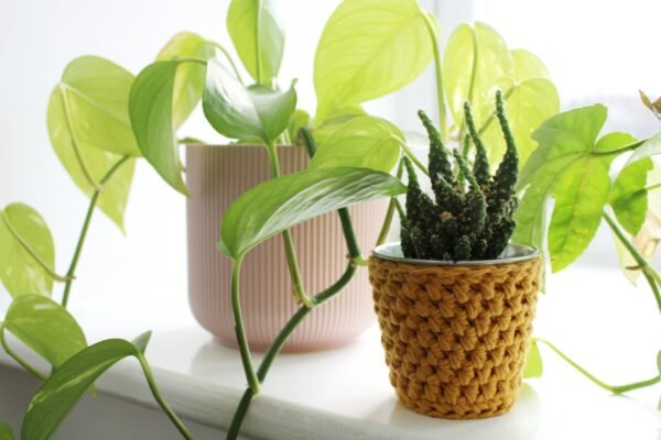 Crochet pot in mustard sits on a windowsill next to a devil's ivy in a pink pot