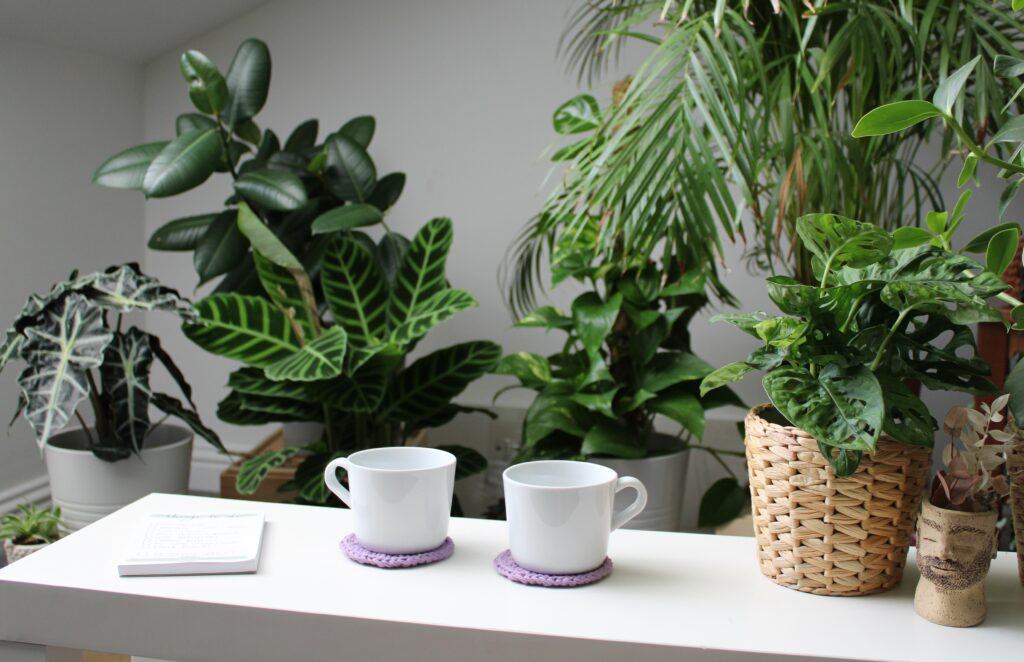 A pair of white coffee cups sits on lilac crochet coaster made using Hoooked recycled cotton DK. They are on a white coffee table in a plant filled room